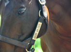 Exceed-close-up-halter